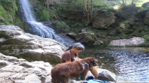 con tu mascota en Cascada de Oneta (Villayón)