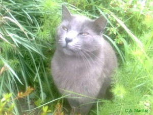 Gatín disfrutando en el jardín de Casa Mariluz de una soleada mañana primaveral.
